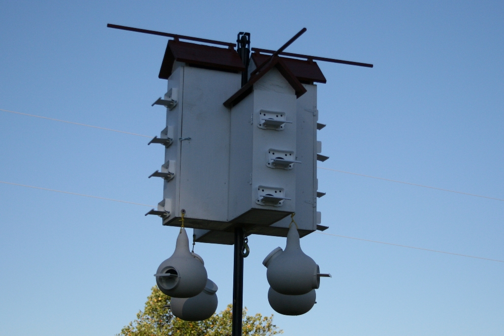 Purple Martin Housing